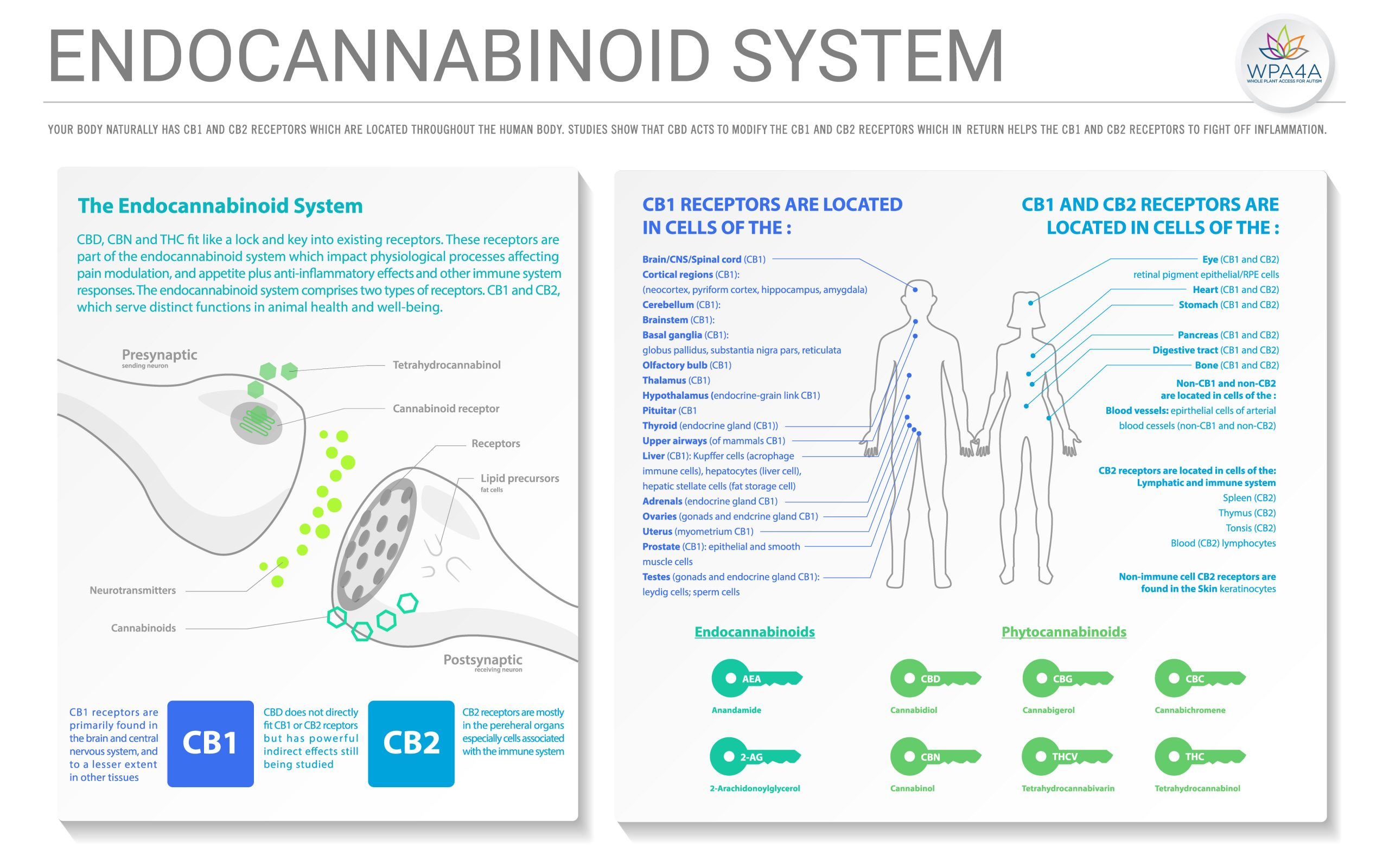 Introduction To The Endocannabinoid System Manual Guide